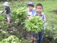 野菜の苗うえ01