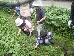 野菜の苗うえ02